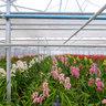 """Orchid Nursery """"De Orchideeën Hoeve"""""""