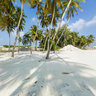 under the coconut palm shade at Ihavandhoo Habour
