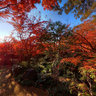 Autumnal colors of