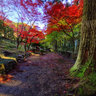 Autumn colour of Tokeiin Temple (1)