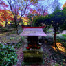 Autumn colour of Tokeiin Temple (3)
