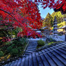 Autumn colour of Tokeiin Temple (5)