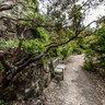Tilden Park Botanical Garden