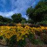 Fountain garden I
