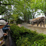 The oldest elephant in Japan