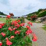 Rose theme Garden