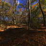 Autumn Forest Road, Mystic, CT. USA