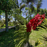 Bali Orchid Garden - Red Orchid