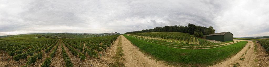 Vineyard at Sancerre