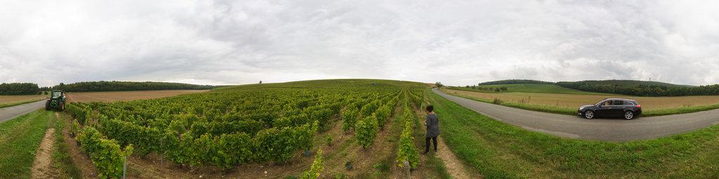 Vineyard at Chavignol