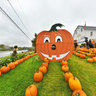 Pumpkin Display Near Presque Isle, Maine, USA