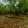 Selva de Cuyabeno