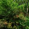 Am Lochturm