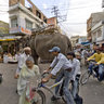 An Elephant Walking Through the Streets of Udaipur in Rajasthan, India