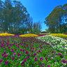 Canberra - Floriade 1