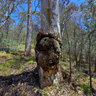 Namadgi National Park - The Forest God