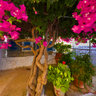 Blossoming tree in Roussa Eklissia (Crete, Greece)