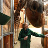 Talking with giraffes at the Riga Zoo, Latvia