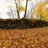 Golden autumn on the ruins of Krimulda Castle, Latvia