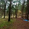 Forest campground