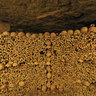 Catacombs of Paris (Catacombes de Paris)