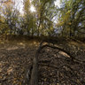 Аutum forest