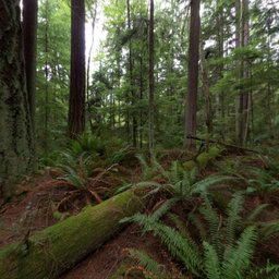 Ridge Loop Trail, South Whidbey State Park, Washington