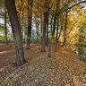 Herbst am Muehlbach in Sythen