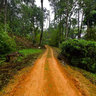 Munnar Jungle