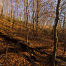 Springton Woods