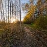 Pushkino. Path to Lake
