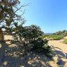 Agios Ioannis Cedar Forest Gavdos Island Crete
