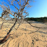 Cedar tree forest, Sarakiniko, Gavdos Island
