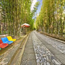 yunnan Ancient City dali Butterfly SpringBamboo Forest Avenue