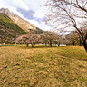 Tibet Nyingchi Yaluzangbu River Great Canyon——Peach blossom trees in jiala village
