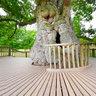 Le chêne Guillotin