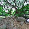温州中山公园 树荫下的圆石凳 The round stone under the trees in Zhongshan Prak, Wenzhou