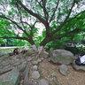 温州中山公园 树荫下的圆石凳 The round stone under the trees in Zhongshan Prak, Wenzhou