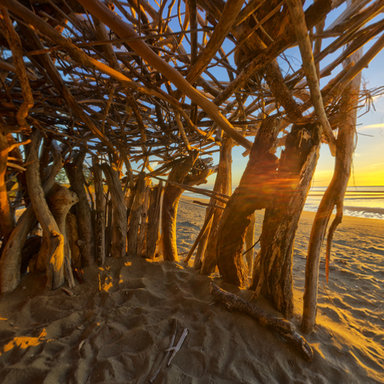Drift Wood Shelter