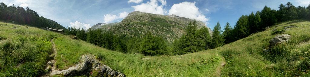 Flowers at the Eien Alp in the wonderful Saas Valley