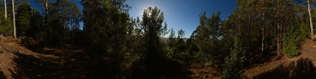 Walking Trail near Lemonthyme Lodge, Tasmania