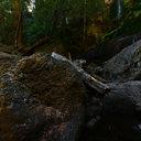Champagne Falls near Lemonthyme Lodge, Tasmania