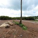 Brandele - Mayotte