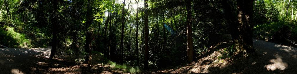 Seminary Trail (1) - Saint Edward State Park, Washington State