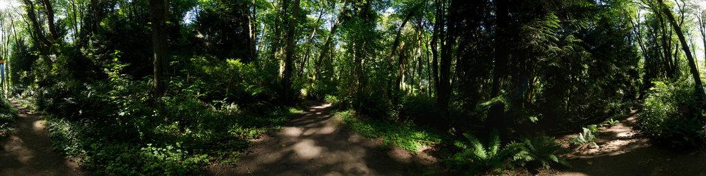 Orchard Loop Trail - Saint Edward State Park, Washington State