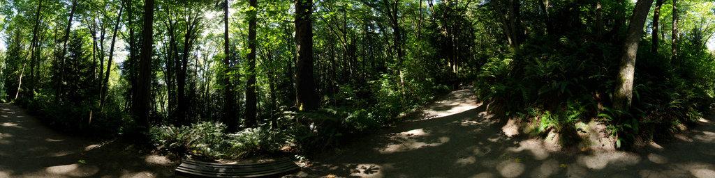 Seminary Trail (2) - Saint Edward State Park, Washington State