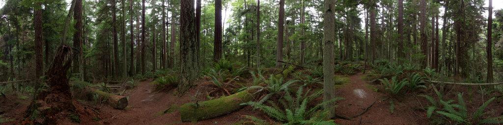 Ridge Loop Trail, South Whidbey State Park, Washington